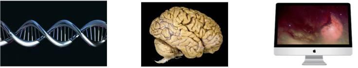3c12d-genoma_cerebro_ordenador